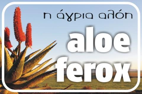 aloe-ferox[1]