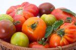 Οι βιολογικές ντομάτες περιέχουν περισσότερες πολυφαινόλες